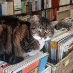 Livraria Paraíso do Livro